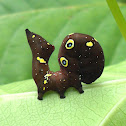 Fruit-piercing Moth Caterpillar