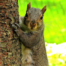 HEY THERE by Doug Hilson - Animals Other Mammals ( cute, close up, squirrel )