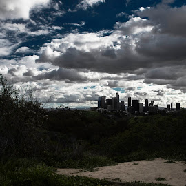 Los Angeles by Anna Cicone - City,  Street & Park  Skylines ( canon, urban, nature, park, los angeles, 6d, city )