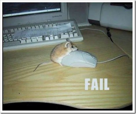 Funny mouse picture - Real mouse and computer mouse.