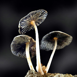 EPHEMERAL by ML Sah - Nature Up Close Mushrooms & Fungi