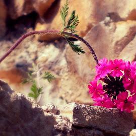 A flower by Žaklina Šupica - Novices Only Macro