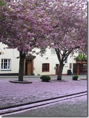 Blossom snow 2