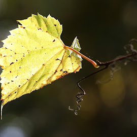 Leaf-me alone by Marty Cutler - Nature Up Close Leaves & Grasses ( nature, nature up close, nature photography, leaf, yellow leaves )