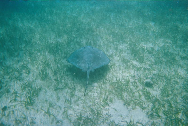 13. Stingray while snorkeling