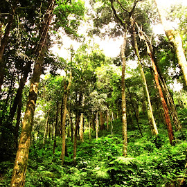 by Hari Prasath - Landscapes Forests ( forests, tree stump, forest floor, trees, tree trunk )