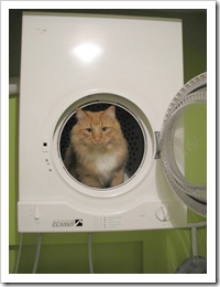 dryer tiger