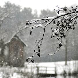 Let it snow by Paula Guerra - Landscapes Weather ( winter, nature, snow, snowing,  )