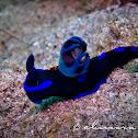 Morose Nudibranch
