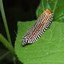 Kaleidoscope moth