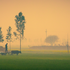 Panjaab by Jatin Malhotra - Nature Up Close Trees & Bushes ( fog, green, set, cart, sun )