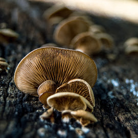 Growing by Pedro Galvao - Nature Up Close Mushrooms & Fungi ( detail, color, street, day, photo )