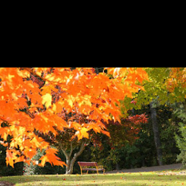 Front yard bench by Kate Holmes - Backgrounds Nature ( front yard bench )