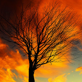 Winter Sunset. by Dave  Horne - Landscapes Sunsets & Sunrises