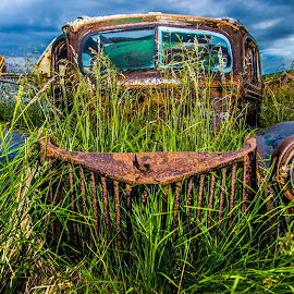 In the scrap yard by Guðný Magnúsdóttir - Transportation Automobiles ( gras, iceland, old car, hdr, scrap )