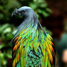 watch my back... by Anne Nor Wati - Animals Birds ( animals, new york, central park, birds,  )