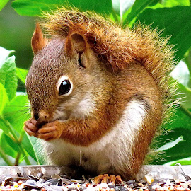 LITTLE SQUIRREL by Doug Hilson - Animals Other Mammals