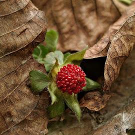 by Ksenija Glavak - Nature Up Close Leaves & Grasses