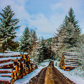 428 by Paul Cobb - Landscapes Forests ( forrest, logs, road )