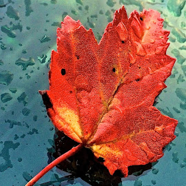 Leaf on wet car with iPhone by Tyrell Heaton - Instagram & Mobile iPhone ( red, fall, wet, leaf, iphone,  )