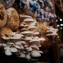 by Zaameedhearts Zahirshah - Nature Up Close Mushrooms & Fungi