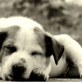 puppy by Sourav Rocky - Animals - Dogs Puppies