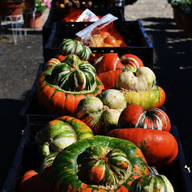 Farmers Market Pumpkins by Carrie Cooper - Food & Drink Fruits & Vegetables ( farmers market, food photography )