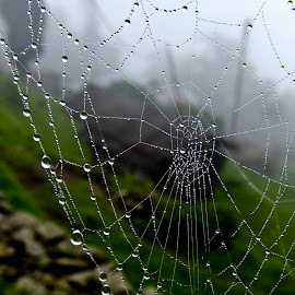 web just dropped by Ankur Dey - Nature Up Close Natural Waterdrops ( macro, web, droplets )