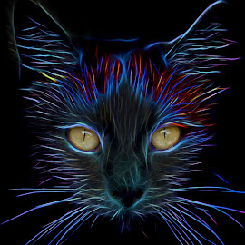 Ruby - A cat abandoned by neighbours which I rescued. She is a most loveable cat. by Roy Branford - Digital Art Animals ( cats )