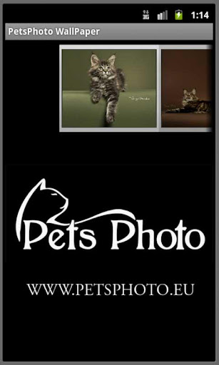 Pet Photo WallPaper