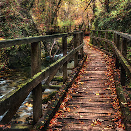The bridge by Višnja Bolf - Buildings & Architecture Bridges & Suspended Structures ( autumn, the creek, canyon, forest, bridge )