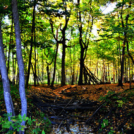 by Chandra Whitfield - Landscapes Forests ( water, nature, autumn, fall, creek, forest, leaves, woods, photography )