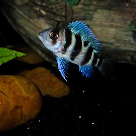by Bishoy Adel Zakaria - Animals Fish