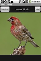 Screenshot of Free Birds Sounds
