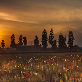Volcano, flowers and sunset by Cristobal Garciaferro Rubio - Landscapes Prairies, Meadows & Fields ( flowers field, volcano, sunset, smoking volcano )
