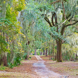 The Beauty of a Park by Bridgette Rodriguez - City,  Street & Park  City Parks ( savannah, southern, park, nature, path, moss, trees, renewal, green, forests, natural, scenic, relaxing, meditation, the mood factory, mood, emotions, jade, revive, inspirational, earthly )