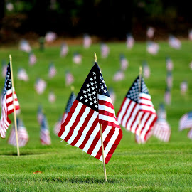 Bourne, MA by Pennie Shaw - News & Events US Events ( red, blue, grass, green, cemetery, white, us flags )
