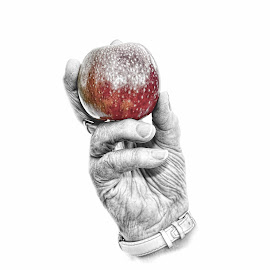 Catch by Ann Slatford - Artistic Objects Other Objects ( hand, fruit, old, red, apple )