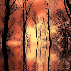 by Bogdan Sabangianu - Landscapes Forests