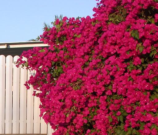 Записи с меткой балконы в цветах