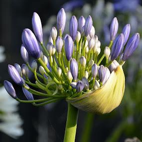 new beginning  by Zhenya Philip - Flowers Flower Buds (  )
