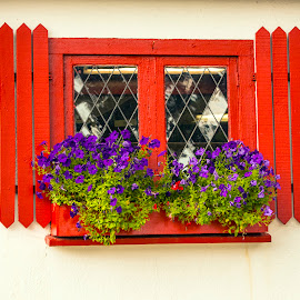 Windoe in Maine by Walter Carlson - Buildings & Architecture Architectural Detail ( red, maine, window, glass, flowers, shuters )