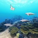 Dolphin Ocean 360° icon