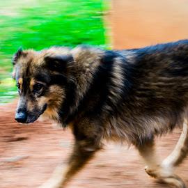 sparky by Aditya Bugadi - Animals - Dogs Running ( running dog, dog, running )