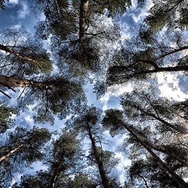 Looking Up by Ray Rickaby - Nature Up Close Trees & Bushes ( trees, tree formations.,  )