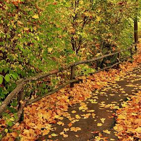 Pathway to Glory by Abhinav Ganorkar - City,  Street & Park  City Parks ( fall colors, autumn leaves, fall, autumn colors, city park,  )