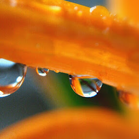 *try it again by Rayna Brilliantsyah - Nature Up Close Other Natural Objects