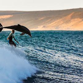 Right Place Right Time by Matt Hutton - Animals Sea Creatures ( dolphin, surfing, waves, matt hutton photography, kalbarri, ocean, beach, western australia )