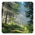 App Forest Live Wallpaper APK for Windows Phone