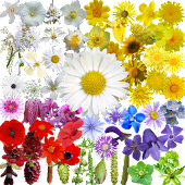 Free What's that flower? APK for Windows 8